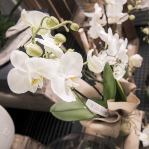 greenvillage-garden-piante-interno-esterno-cittadella (3)