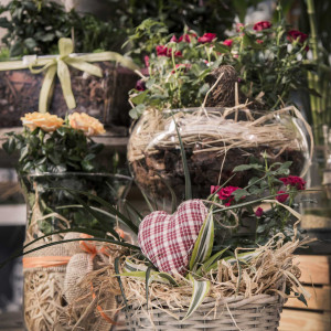 greenvillage-garden-piante-interno-esterno-cittadella (7)