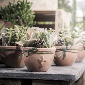 greenvillage-garden-piante-interno-esterno-cittadella (13)