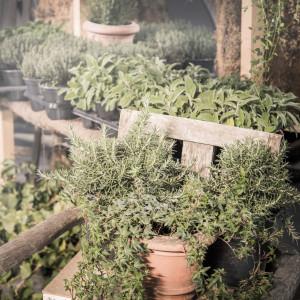 greenvillage-garden-piante-interno-esterno-cittadella (14)