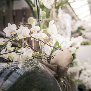 greenvillage-garden-piante-interno-esterno-cittadella (5)
